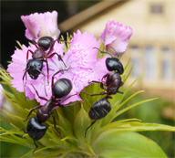 Mantenga a las Plagas Lejos de su Casa y Jardín