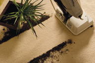 <b>The Truth About Allergies and Carpet</b>&#8220;></td> <td> <p>(<a href=