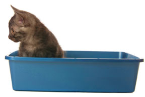 Stop Feline Urinary Tract Problems With a Clean Litter Box