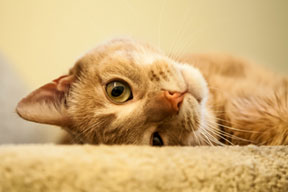Three Surprising Ways to Save Money on Pet Care