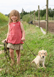 <b>Fleas and Ticks Pose Problems for Pets</b>&#8220;></td> <td> <p>(<a href=
