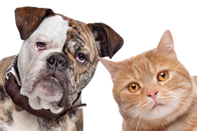 Help Your Pets Avoid the Threat of Fleas
