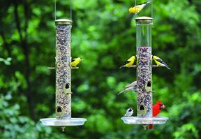 bird feeding for stress relief