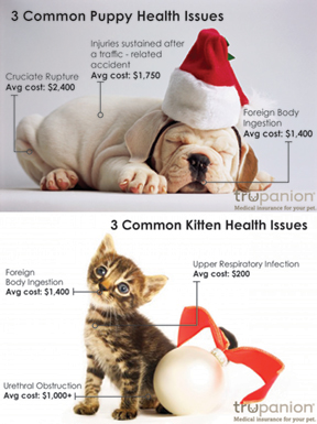 Is There a New Puppy or Kitten Under Your Tree This Year?