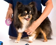 <b>Bring Dog Grooming Costs to Heel</b>&#8220;></td> <td> <p>(<a href=