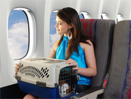 <b>Sweeten the Kitty: Tips for Easier Traveling with Pets</b>&#8220;></td> <td> <p>(<a href=