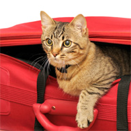 <b>Tips for Stress-free Traveling with Kitty</b>&#8220;></td> <td> <p>(<a href=