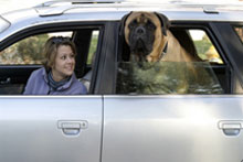 <b>Tips for Safe Travel With Your Pet</b>&#8220;></td> <td> <p>(<a href=